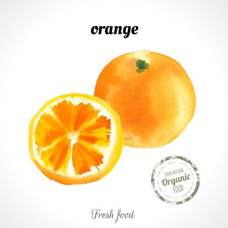 Naranja de la acuarela. Agrios. Acuarelas recientes de los alimentos ecológicos. Fruta exótica fresca.