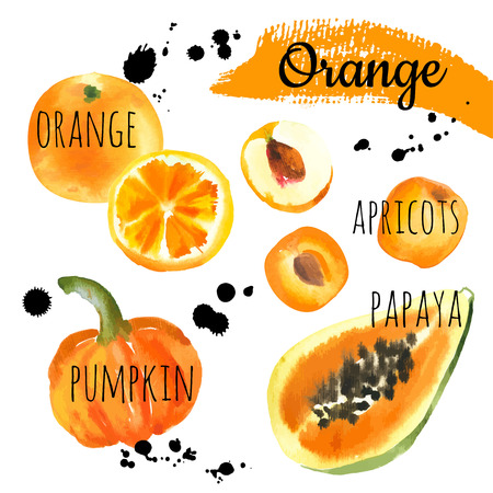 Fresh organic food. Set of different fruits & vegetables: pumpkin, orange, papaya, apricot & peach. Simple painting sketch in vector format. Orange set.