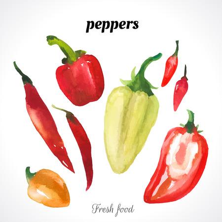 pimientos: Ilustración de la acuarela de una técnica de pintura. Los alimentos frescos orgánicos. Conjunto de diferentes variedades de pimientos: pimientos de chile, pimiento, ají dulce, caliente.