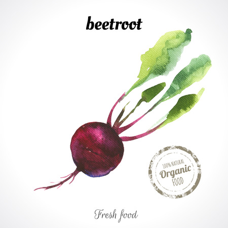 recent: Watercolor beetroot. Provencal style. Recent watercolor paintings of organic food. Fresh vegetables. Illustration