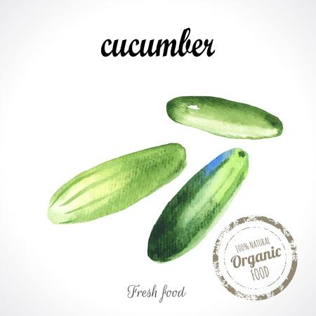 recent: Watercolor green fresh cucumbers. Provencal style. Recent watercolor paintings of organic food. Veggie menu.