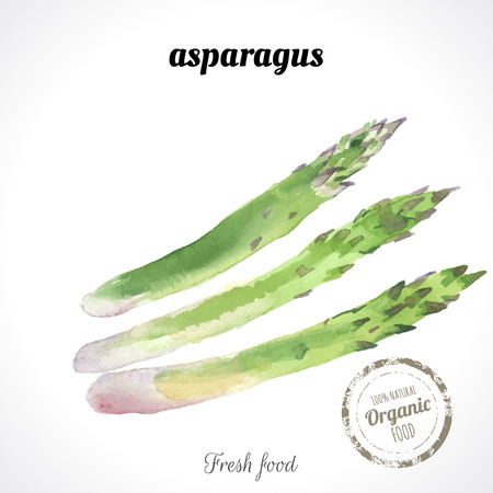 asparagus: Watercolor asparagus. Provencal style. Recent watercolor paintings of organic food. Fresh asparagus.
