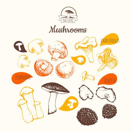Hand-drawn sketch on white background. Fresh organic food. Mushrooms: shiitake, chanterelle, honey. Sketch of mushrooms on white background.