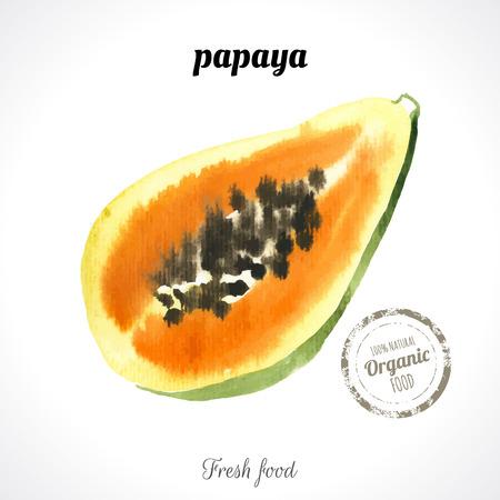 papaya: Watercolor papaya. Provencal style. Recent watercolor paintings of organic food. Fresh exotic fruit.