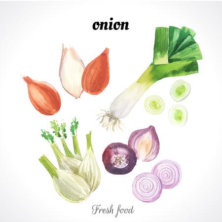신선한 유기농 식품. 샬롯, 파, 회향 및 붉은 양파 : 다른 종류의 양파의 집합입니다. 벡터 형식으로 간단한 그림 스케치. 야채를 설정합니다. 일러스트