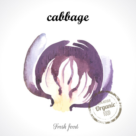 splitting: Watercolor purple cabbage. Provencal style. Recent watercolor paintings of organic food. Veggie menu. Splitting