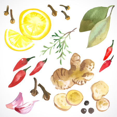 spice: Watercolor set of herbs and spices drawn by hand on a white background.