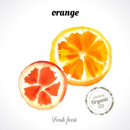 exotic fruit: Watercolor orange slice. Provencal style. Recent watercolor paintings of organic food. Fresh exotic fruit.