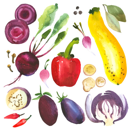 Watercolor vegetables and herbs. Provencal style. Recent watercolor paintings of organic food. Radishes, zucchini, pepper, bay leaves, ginger, green onion, asparagus, rosemary, cloves, pumpkin.