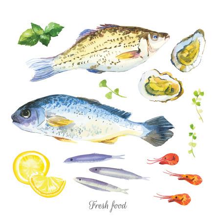 수채화는 생선, 해산물, 굴, 바 질, 다른 허브와 향신료로 설정합니다. 흰색 배경에 손으로 그린. 벡터 형식으로 간단한 그림 스케치.