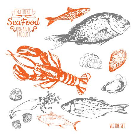 스케치를 손으로 그린. 신선한 유기농 식품. 해산물 : 생선, 새우, 황새, 굴, 오징어, 조개. 흰색 배경에 스케치 해산물. 일러스트