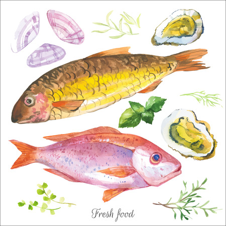 gourmet food: Watercolor set with fish seafood, clams and spices hand-drawn on a white background. Red mullet & oysters with basil & and other herbs. Simple painting sketch in vector format.