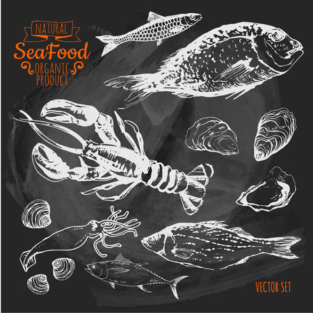Illustration on a blackboard. Hand-drawn sketch. Fresh organic food. Seafood: fish, lobster, dorado, oysters, squid, clams. Sketch seafood on white background.