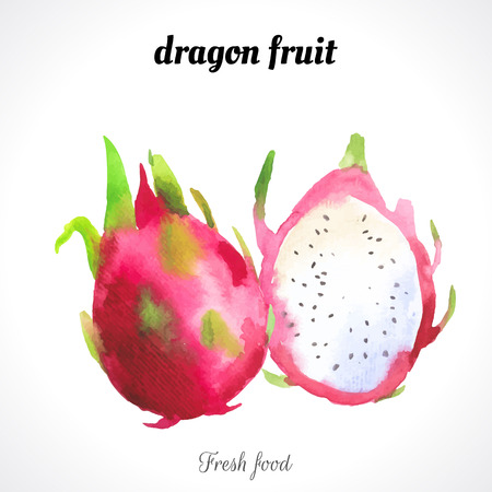 Watercolor dragon fruit . Provencal style. Recent watercolor paintings of organic food. Fresh exotic fruit.