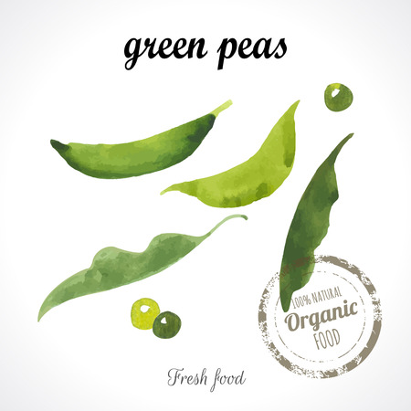 in peas: Watercolor young peas. Provencal style. Recent watercolor paintings of organic food. Veggie menu