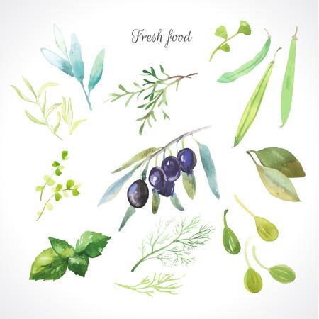 Ilustración de la acuarela de una técnica de pintura. Los alimentos frescos orgánicos. Conjunto de diferentes hierbas. Aceitunas, romero, salvia, estragón, alcaparras, eneldo, frijoles y la hoja de laurel.