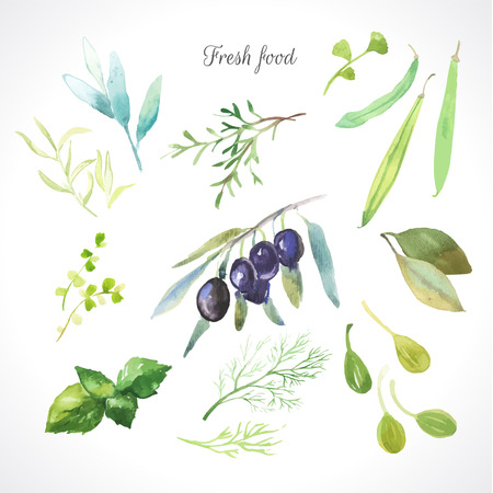 Watercolor illustration of a painting technique. Fresh organic food. Set of different herbs. Olives, rosemary, sage, tarragon, capers, dill, beans and bay leaf.