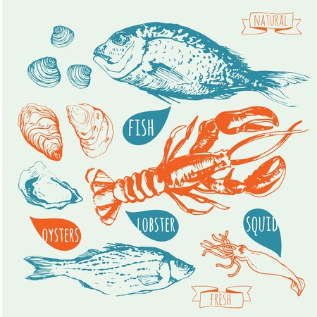 seafood background: Fresh organic food. Seafood: fish, lobster, dorado, oysters, squid, clams. Sketch seafood on blue background.