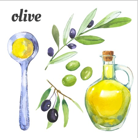 olive leaves: Watercolor illustration of a painting technique.  Mediterranean Food Illustration