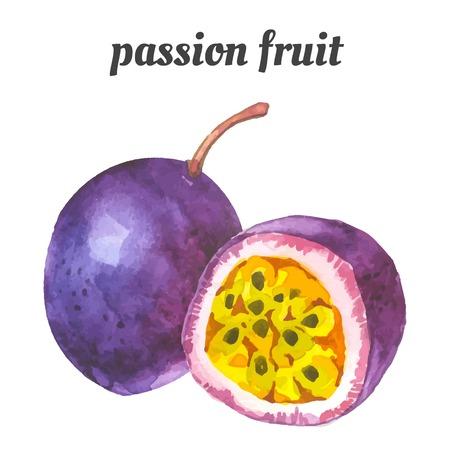 pasion: Ilustración de la acuarela de una técnica de pintura. Los alimentos frescos orgánicos. Maracuyá.