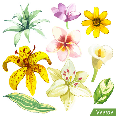 Fabric Texture: Painting white and yellow set of flowers with calla lily, plumeria and leaves.