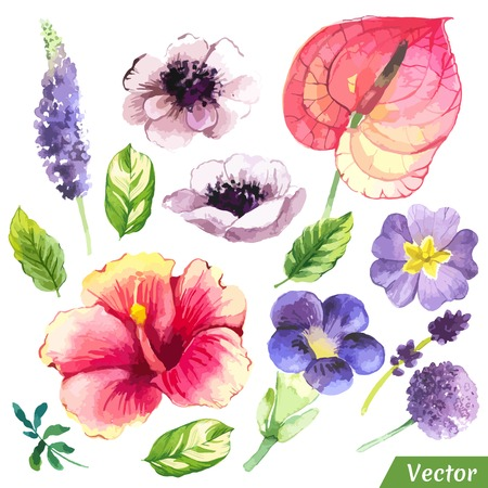 green plants: Painting set of flowers with chinese hibiscus, anthurium, anemon and leaves.