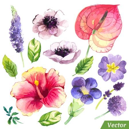 flores chinas: Pintura conjunto de flores con el hibisco chino, anthurium, Anemon y se va. Vectores