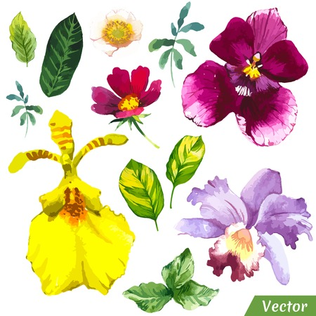 Painting set of flowers diferent orchid and leaves.