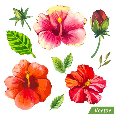 Painting red set of flowers with chinese hibiscus and leaves.