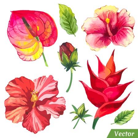 flores chinas: Pintura rojo de flores con el chino hibisco, anturios y hojas