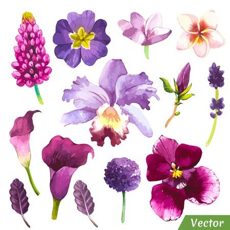 flor de lis: Pintura conjunto violeta de flores con cala, plumeria, orquídeas y hojas. Vectores