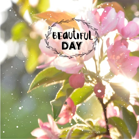penetrating: Sunlight penetrating flowering tree. Beautiful day. Blooming tree.