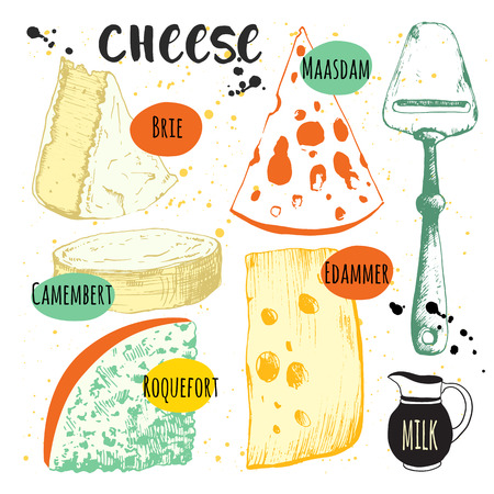 brie: Vector illustration with sketch food. Fresh organic food.