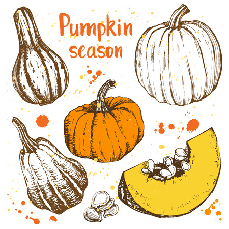 pumpkin seed: Sketches of orange pumpkins. Vector illustration of the autumn harvest. Thanksgiving Day.