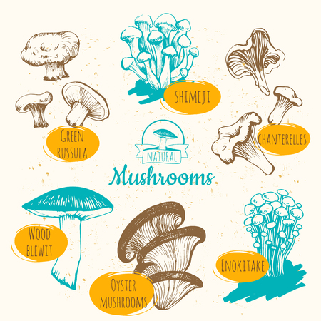 contemporary taste: Sketch of mushrooms on white background.