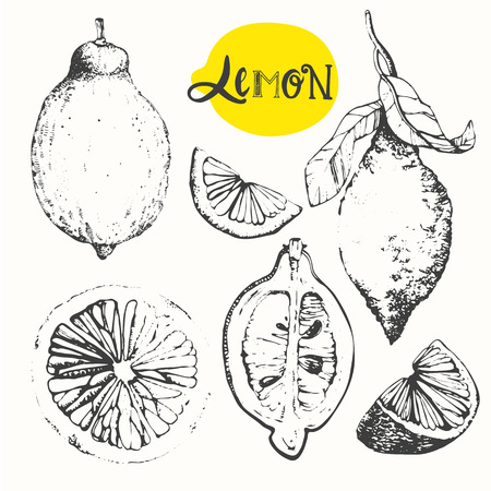 vintage drawing: Vector illustration with sketch of ripe citrus.