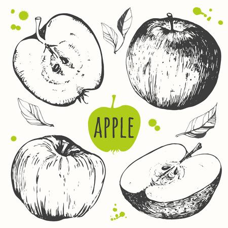 Vector illustration with sketch fruit. Apple. Vettoriali