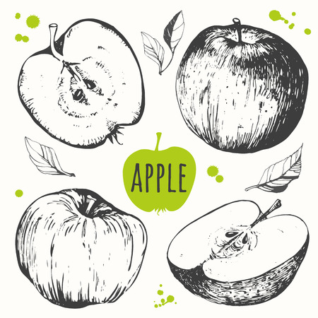 Vector illustration with sketch fruit. Apple. 矢量图像