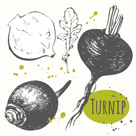 root vegetables: Fresh organic food. Vector illustration with sketch vegetable.