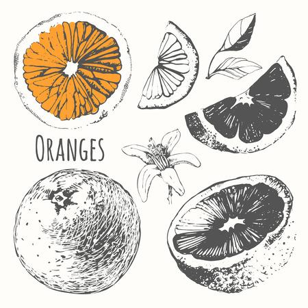 Vector illustratie met de hand getekende van oranje. Zwart-wit schets van voedsel.