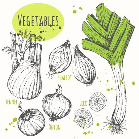 cebolla: Los alimentos frescos orgánicos. Ilustración vectorial con el vehículo boceto. Bosquejo blanco y negro de los alimentos.