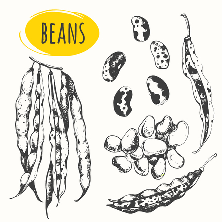 garden peas: Fresh organic food. Vector illustration with sketch pods of asparagus. Black and white.