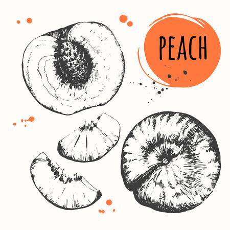 peach: Set of hand drawn peach. Fresh organic food.