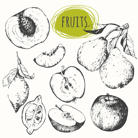 Fresh organic food. Vector illustration with sketch fruits. Black and white sketch of food. Vettoriali
