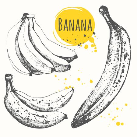 amarillo y negro: Fresh organic food. Vector illustration with sketch fruit. Vectores