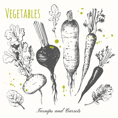 Black and white sketch food. Vector illustration with sketch vegetable. Turnips, carrots and radishes.