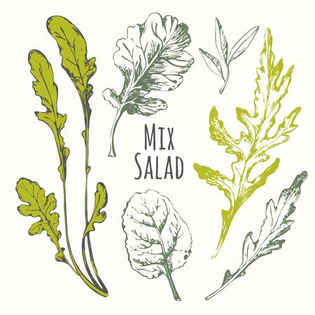 Fresh organic food. Vector illustration with sketch salad herbs.
