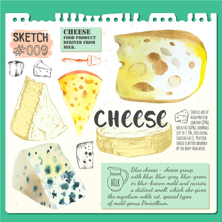 fresh food: Bar of cheese. Sketch and watercolor illustration with cheeses. Fresh organic food.