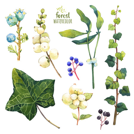 winter garden: Set of winter and autumn forest plants. Collection of herbarium garden. Snowberry, ivy and wild grape. Stock Photo