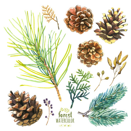 Conjunto de ramificaciones del otoño de pino, abeto y árbol de la vida. Colección de herbario de las maderas.